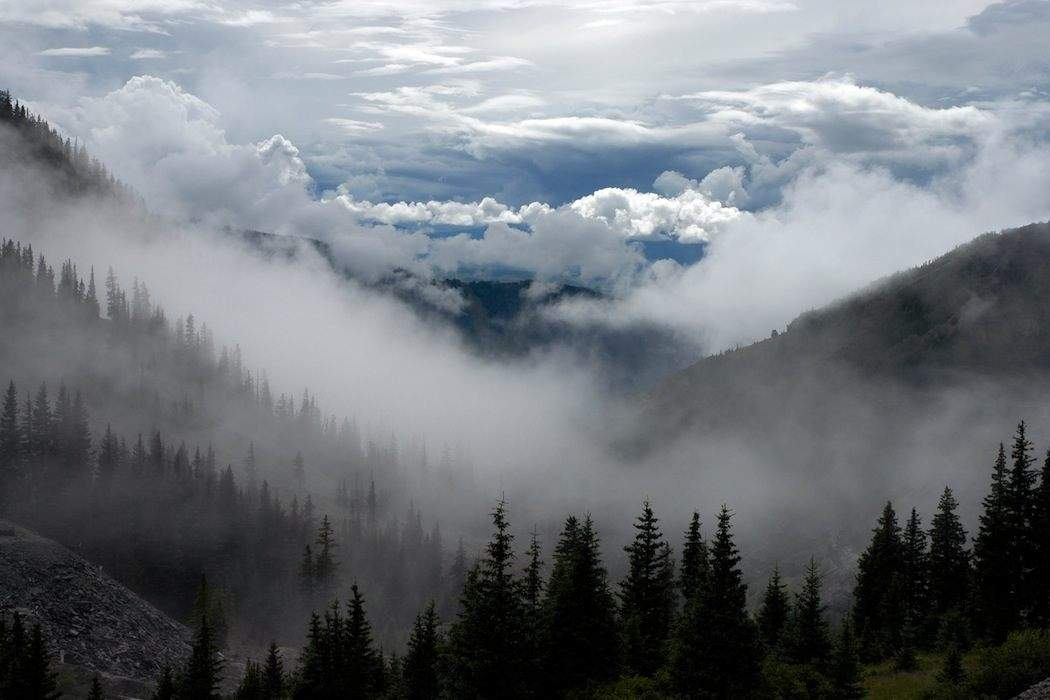 forest fog mist clouds